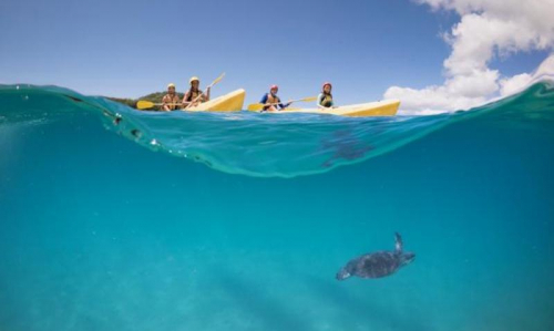 Guided Dolphin Kayaking Half Day Tour