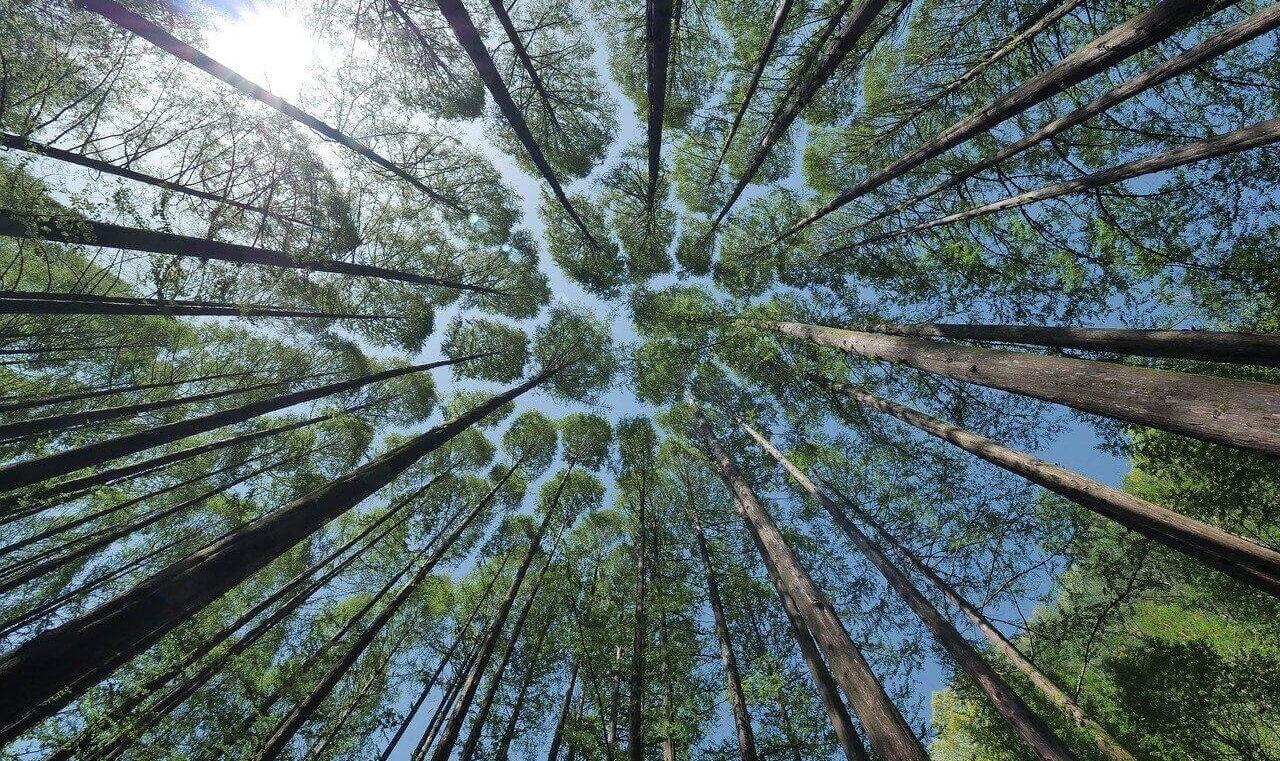 How we offset our Carbon Footprint